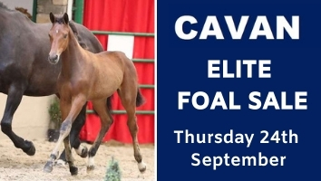 "Cavan Foal September<span class=""sr-only"">; opens in a new window </span>"