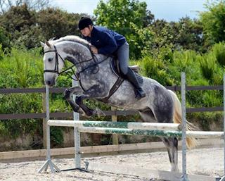 POTENTIAL TOP CLASS < County standard 6yr old gelding