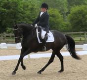 Talented young dressage / potential super smart event horse