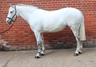 Top Class Allround competition pony / Potential FEI