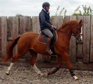 OUTSTANDING YOUNG DRESSAGE PONY