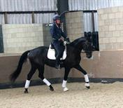Advanced Dressage Prospect