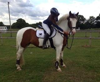 14.3hh  Welsh Part Bred 8yrs