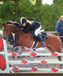 STUNNING SHOW JUMPER / ALL ROUNDER