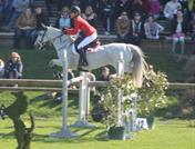 FEI and European  Grand Prix ponies for sale