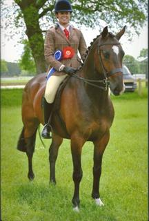 Potential Novice Working Hunter