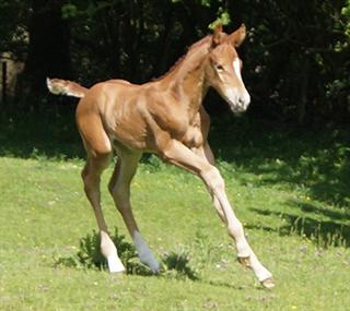 FLASHY FIRESTONE FILLY