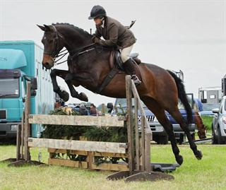 County Level Working Hunter & Allrounder