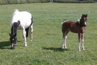 BEAUTIFUL COLOURED FILLY FOAL