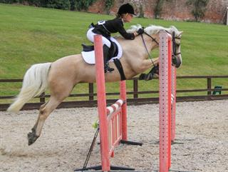 Talented, consistent and safe competition pony