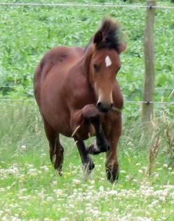 Stunning Section D Foal