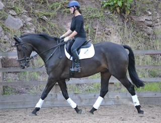 Ladies Dressage Horse / Hunter