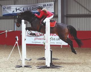 14.1hh mare for sale