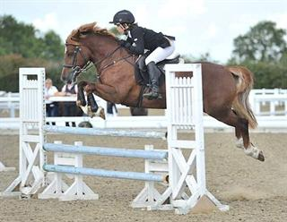 14.1hh JC / ALL ROUNDER PONY *PRICE REDUCED*!!!!!