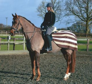 WANTED Experienced Dressage Horse