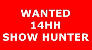 Wanted 14hh Show Hunter
