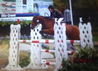 EXCEPTIONALLY TALENTED 138 SHOW JUMPING PONY