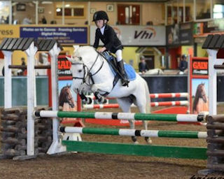 Top class Grade A showjumper / all-rounder for sale