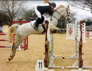 FANTASTIC 148 SHOW JUMPING / PONY CLUB / EVENT PONY