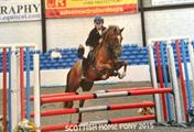 Top Pony Club Prospect / Competition Pony