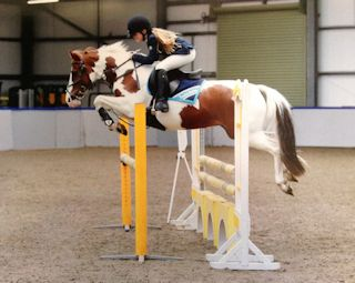 Outstanding Allrounder / Competition Pony