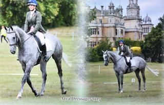 Stunning Competition Horse for Sale