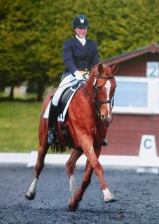 10 YEAR OLD ADVANCED DRESSAGE HORSE