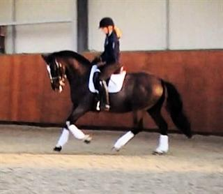 WOW FACTOR! Elegant Small Dressage Horse