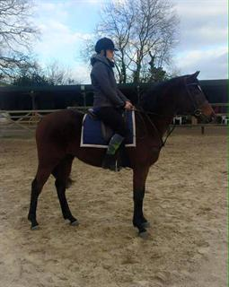 15.1HH POTENTIAL SMALL INTERMEDIATE / HACK / ALLROUNDER  TYPE