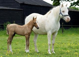 Foal sold dam available at weaning
