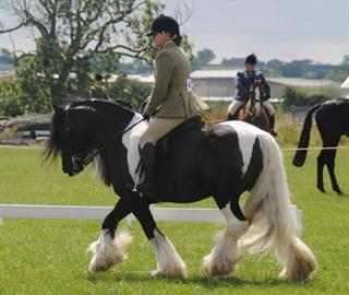 Beautiful traditional gypsy cob