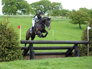 Genuine Novice / 1* Schoolmaster  For Sale