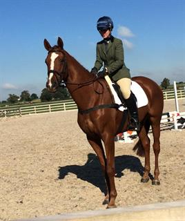 Wanted - Experienced Event Horse