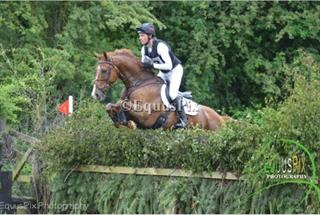 Top Class Intermediate Event Horse - Irish Sport Horse