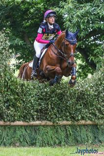 Talented Allrounder / Eventer