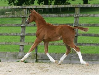 Top class free moving colt by Monte Carlo