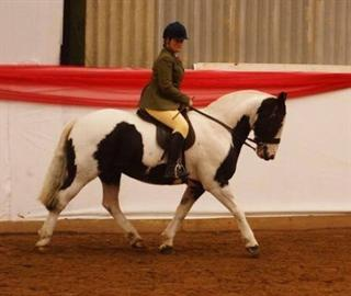 Top quality Schoolmaster all rounder .