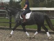 Dressage Superstar
