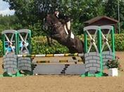 Talented Young Event Horse
