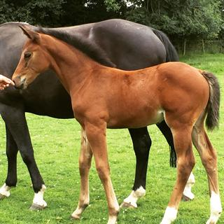 Stunning Filly