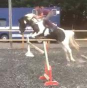 Stunning potential showjumper / eventer